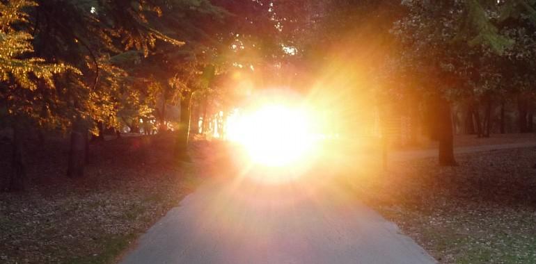 Sonce in drevesa